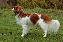 Cody-Ginger-von-der-Gramme-Aue-4
