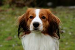 Cody-Ginger-von-der-Gramme-Aue-5