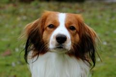Cody-Ginger-von-der-Gramme-Aue-6