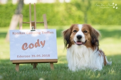 Cody-liegt