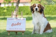 Cody-sitz