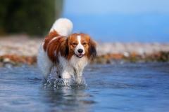 Cody-water